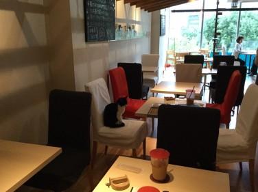 fukuoka-catloft-cafe_2973