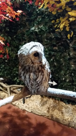 Went to an owl room where you can pet the owls!