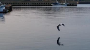 Stork or heron flying across the port waters