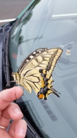 This cool butterfly just hung out on my car while I shopped at Aeon.