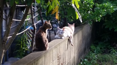 My neighbours cats!