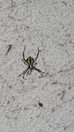 And the pet spider I keep to get the bees!