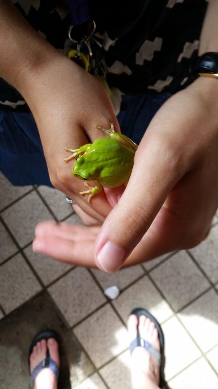 Its a sticky frog! At Tsutsukihama beach!