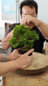 My juniper bonsai!