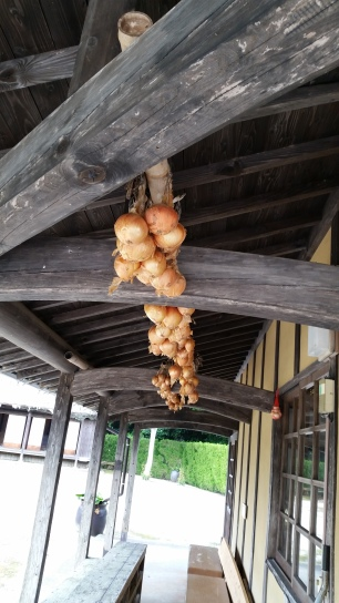 Onions a drying!