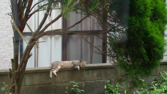 Napping in the sun on the garden wall!