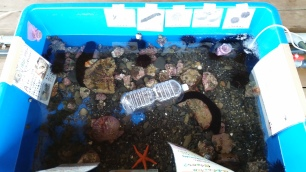 The touch tank at dolphin park! I know all these creatures thanks to biology class in uni!!